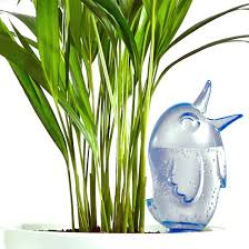 how to care for indoor plants houseplants planet natural