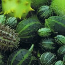ornamental fruits