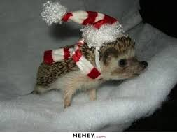 Cute Christmas Meme - a baby hedgehog in a christmas costume memey com