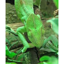 coloring pages of animals in their habitats camouflage animals how do animals camouflage if the environment