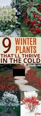 9 beautiful plants that will survive during winter gardening viral