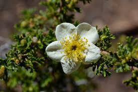 native plants albuquerque community partners albuquerque herbalism