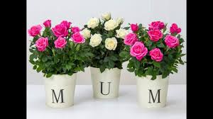 flower deals mothers day flowers 2017 best flower delivery deals from m and s