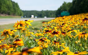 North Carolina vegetaion images Ncvma north carolina vegetation management association jpg