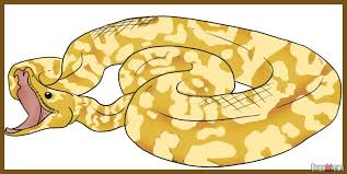 online tutorial of python how to draw a python step by step snakes animals free online