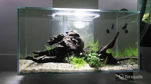 idee deco aquarium aquarium fluval edge 2 l u0027entretien youtube