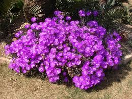 Purple Flowering Bush 25 Best Purple Flowering Bush Ideas On