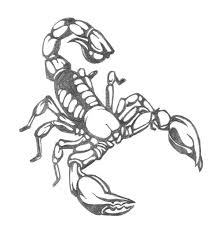 scorpion design by icedrgn027 on deviantart