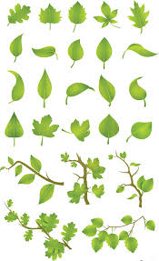 green leaves vector set free download