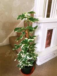 plants easy english ivy house plants houseplants to care for