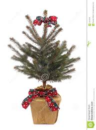 Potted Christmas Trees For Sale by Potted Christmas Trees For Sale Christmas Lights Decoration