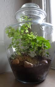 closed terrarium with maidenhair fern and peperomia caperata