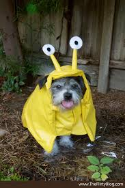 Halloween Costumes Dogs Cutest Puppy Costumes 2011 Cute Dog Costumes