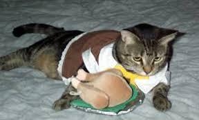 thanksgiving pilgrim cats 11 pictures