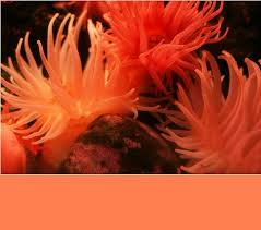 coral color coral color combinations ideas for interior