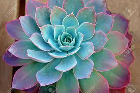 garden design garden design with thegardenpages succulent plant