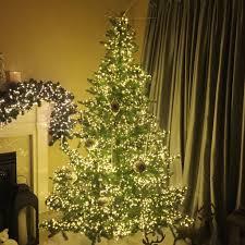 christmas trees and lights the