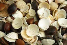 assorted seashells how to decorate pottery with seashells home guides sf gate