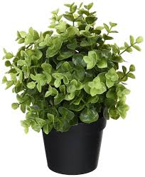 Silk Plants Direct Jade Plant Amazon Com Ikea Artificial Potted Plant Jade 9 5 Inch