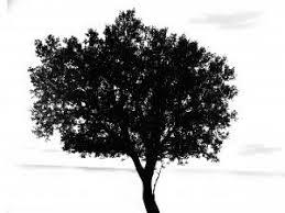 black tree vector photo free