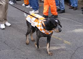 names for a bluetick coonhound smokey mascot wikipedia