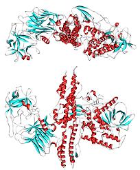 file botulinum toxin 3bta png wikimedia commons