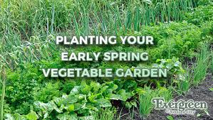 planting your early spring vegetable garden evergreen of johnson