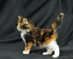 halloween kitten wallpaper cute cats and kittens wallpaper wallpapersafari kittens