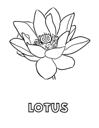 lotus a national flower of india coloring pages in lotus coloring