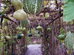 ideas and inspiration for a modern vegetable garden vegetable