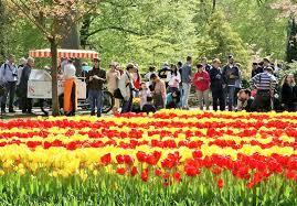 keukenhof flower garden near amsterdam amsterdam info