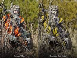 Color Blind Camouflage Test What Deer See Whitetail Vs Hunter Outdoor Experiment