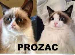 Original Grumpy Cat Meme - grumpy cat meme weknowmemes