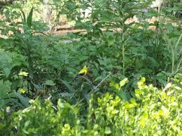 garden of aaron botanical garden review cheekwood nashville