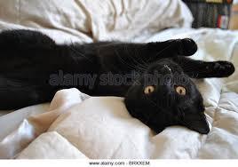 Kitten Bed Black Cat Lying Bed Stock Photos U0026 Black Cat Lying Bed Stock