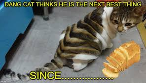 Cat In Bread Meme - my cat is white bread no butter imgflip