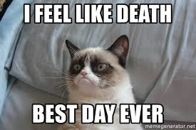Best Day Ever Meme - i feel like death best day ever grumpy cat meme generator