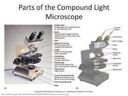 compound light microscope parts and functions microscopy and cytology ppt download