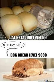 Cat Breading Meme - cat bread vs dog bread by thatguyxlr meme center