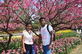 Beijing Botanical Garden Tulip Garden Picture Of Beijing Botanical Garden Beijing