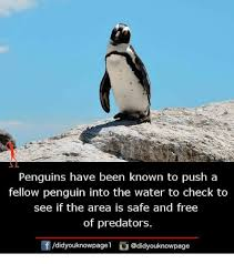 25 best memes about penguins penguins memes