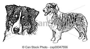 australian shepherd outline clipart vector of australian shepherd illustration on white