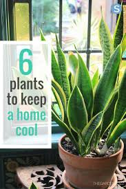 mesmerizing cool plants to grow inside 14 for your apartment