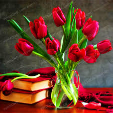 tulips flowers hot sale tulips flowers bonsai tulip seed flower plants
