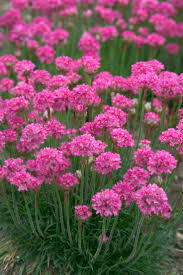 12 Best Annual Flowers For by 12 Best Flowering Perennials For Spring 2016 Images On Pinterest