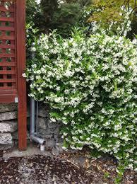 name your favourites help me fill a trellis gardening forum