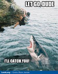 Funny Shark Meme - the 25 funniest shark memes complex