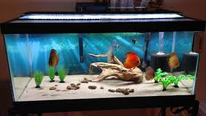 cuisine freshwater aquarium design ideas aquarium design ideas