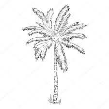 sketch palm tree u2014 stock vector nikiteev 83500320