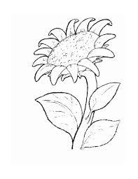 flower u2013 alcatix com
